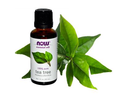 Чайное дерево (100% эфирное масло), 30 мл, NOW фото